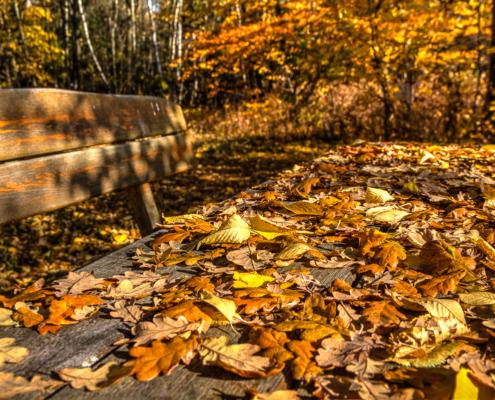 Herbst im Vogelsberg am Rothebachteich in Freiensteinau