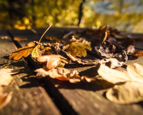 Herbststimmung im Vogelsberg am Rothebachteich in Freiensteinau
